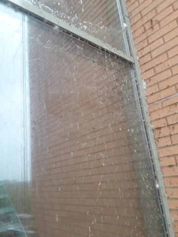 Pdcleaning, glasbewassing, glazenwasser, reguliere schoonmaak, dakgoten, telescopische glasbewassing met osmose